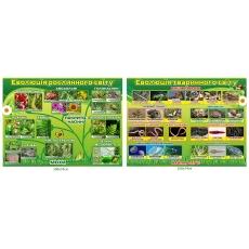 Комплект стендів «Еволюції рослинного та тваринного світів»